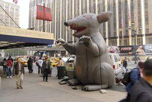 Union_rat_2_a