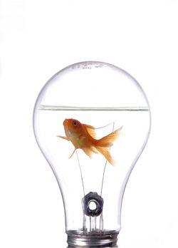 Innovation(2)
