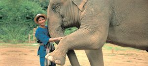 Elephant-camp-anantara-resort-golden-triangle-3